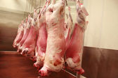 Lamb carcasses in an abattoir — Stock Photo