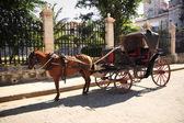 At ve araba havana — Stok fotoğraf