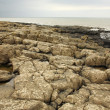 Rocky beach at Northumberland — Stock Photo
