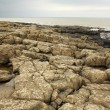 Stock Photo: Rocky beach at Northumberland