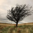 Stock Photo: Single winter tree