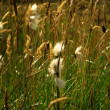Close up of grass in the breeze — Stock Photo