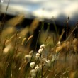 Soft focus grasses — Stock Photo #32462087