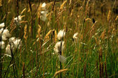 Close up of grass in the breeze — Foto Stock