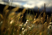 Soft focus grasses — Stock fotografie