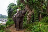 Elephant, Sri Lanka — Stock Photo