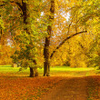 Picturesque Forest in autumn colors — Stock Photo