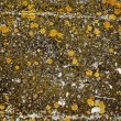 Lichens on stone - natural abstract grunge background — Stock Photo