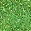 Stock Photo: Seamless green grass background