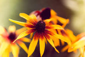 Closeup of a yellow flower with shallow dof — Stock Photo