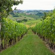 Stock Photo: Hills and vineyards in Piedmont (Italy)