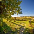 Stock Photo: Calosso (Piedmont, Italy): landscape
