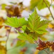 Leaves in autumn — Stock Photo