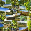 Collage of photos of Astigiano, Piedmont, Italy. — Stock Photo