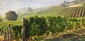 Astigiano, Piedmont, Italy: landscape — Stock Photo