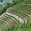 Cossano Belbo (Piedmont, Italy): landscape of Langhe — Stock Photo #28674725
