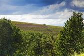 Wijngaard, asti, piemonte, italië — Stockfoto