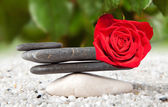 Stones and rose — Stock Photo
