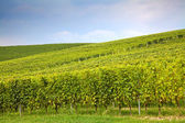 Hills in Piedmont, Italy: landscape — Stock Photo