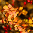 Berries and leaves — Stockfoto