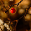 Berries and thorns — Stockfoto