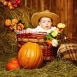 Girl and harvest pumpkins — Stock Photo