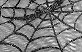 Spiderweb — Stock Photo