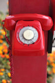 Vintage red telephone — Stock Photo