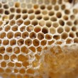 Stock Photo: Honeycomb , close-up