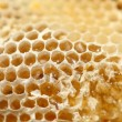 Honeycomb, närbild — Stockfoto
