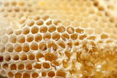 Honeycomb , close-up — Stock Photo