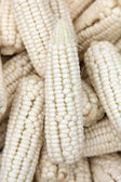 White corn — Foto Stock
