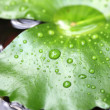 Water droplets on Lotus leaf — Stock Photo