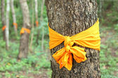Community forest ordination — Stock Photo