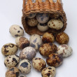Quail eggs in basket — Stock Photo