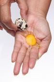 鹌鹑蛋在手断 — 图库照片