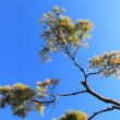 Tree over blue sunny sky, low angle shot. — Stok fotoğraf