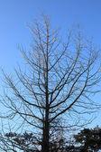 Tree over blue sunny sky, low angle shot. — Stock Photo