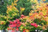 Autumn colored trees in Hida Folk Village takayama japan — Stock Photo