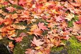Autumn colored leaves close up — Stock Photo