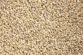 Soy bean pattern — Stock Photo