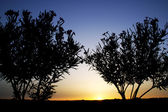 Tree silhouette at sunset — Stock Photo