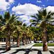 Palm Tree garden with cloudy sky — Stock Photo