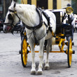 Traditional horses carriages in seville — Stockfoto #33365217