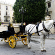 Horse carriage waiting in seville — Stockfoto #33365277