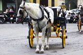 Traditional horses carriages in seville — Stock Photo