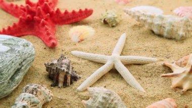 Shells and starfish on sand — Stock Video