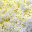 Yellow decorative cabbage in crystals snow — Stock Photo