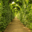 Green tunnel — Stock Photo