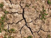 Texture de boue fissuré — Photo